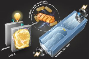 Microfluidic screening of bacteria for power generation, waste digestion